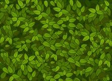 绿色留下纹理 免版税库存图片
