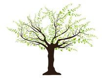绿色留下结构树 库存照片