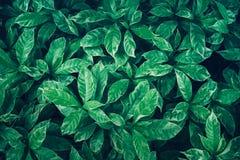绿色留下背景设计 平的位置 叶子顶视图  自然 免版税库存图片