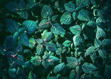 绿色留下背景设计 平的位置 叶子顶视图  自然 图库摄影