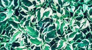 绿色留下背景设计 平的位置 叶子顶视图  自然 免版税图库摄影