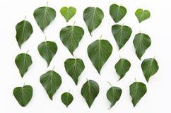 绿色留下花卉样式纹理 平的位置,顶视图 叶子背景 免版税库存照片
