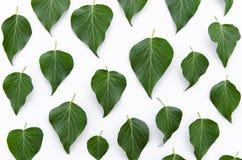 绿色留下花卉样式纹理 平的位置,顶视图 库存照片