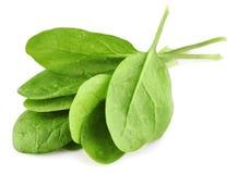 绿色留下菠菜 免版税库存图片