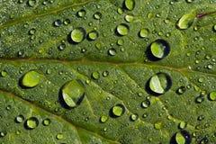 绿色留下雨珠 免版税库存照片