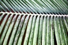 绿色留给热带 模式 特写镜头 背景 图库摄影