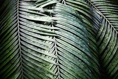 绿色留给热带 模式 特写镜头 背景 免版税库存图片