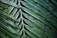 绿色留给热带 模式 特写镜头 背景 库存照片