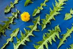 绿色的平的位置样式雕刻了蒲公英叶子和一朵黄色花在时髦蓝色生动的背景 库存照片