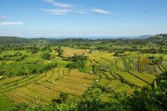 绿色的顶视图在巴厘岛调遣 图库摄影