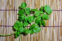 绿色的香菜 库存图片