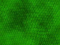 绿色皮肤蛇纹理 库存图片
