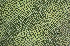 绿色皮肤蛇 库存图片