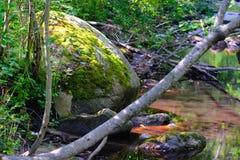 绿色石头、青苔和河 库存图片