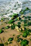 绿色石头水 库存图片