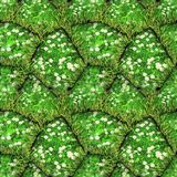 绿色石头的自然无缝的样式与雏菊和草的 免版税库存照片