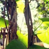 绿色秀丽 图库摄影
