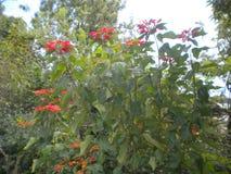 绿色种植颜色花和背景 免版税库存图片