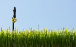 绿色稻工厂年轻人 免版税库存图片