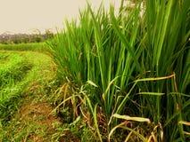 绿色稻工厂 库存图片