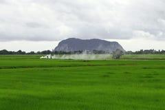 绿色稻田的农夫 免版税图库摄影