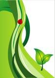 绿色窗框 库存照片