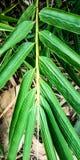 绿色竹叶子在森林里 免版税库存图片
