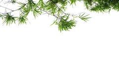 绿色竹叶子,绿色热带叶子纹理隔绝在文件白色背景与裁减路线的 库存照片