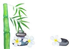 绿色竹子叶子和赤素馨花花水彩例证 向量例证