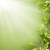 绿色竹子叶子 免版税库存图片