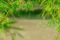 绿色竹子留给框架或边界bokeh背景 库存图片