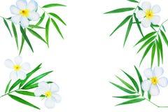 绿色竹子离开广告羽毛花水彩例证 皇族释放例证