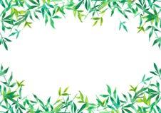绿色竹子离开背景,水彩植物例证的框架 皇族释放例证