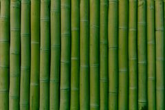 绿色竹子行垂直被找出的 免版税库存照片