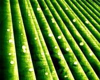绿色竹子 皇族释放例证