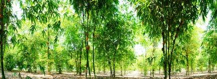 绿色竹庭院全景照片,被种植吃树 图库摄影