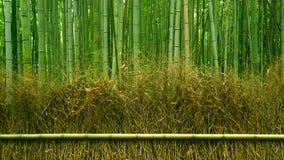 绿色竹植物森林在日本禅宗庭院里 图库摄影