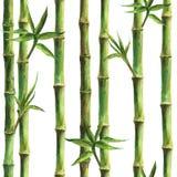 绿色竹词根和叶子无缝的样式 皇族释放例证