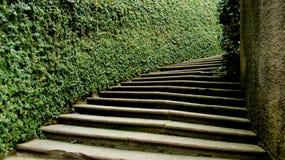 绿色篱芭和步 库存图片