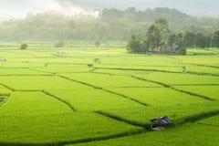绿色米在泰国的乡下调遣 免版税图库摄影