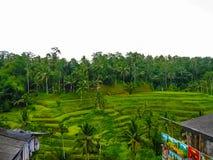 绿色米大阳台在巴厘岛,印度尼西亚 库存图片