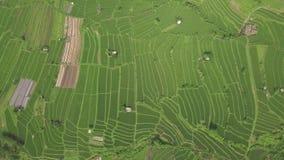绿色米大阳台鸟瞰图 乡下领域的米种植园在从上面寄生虫的亚洲村庄 种田和 股票视频