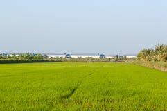 绿色米树在国家, Chachoengsao,泰国 免版税库存图片