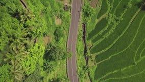 绿色米种植园鸟瞰图 在稻田的寄生虫飞行和驾车在路在亚洲村庄 种田和 股票录像