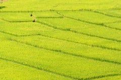 绿色米顶面风景看法在北部泰国归档了 库存照片