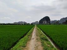 绿色米领域之间的偏僻的道路在联合国科教文组织世界遗产Tam Coc前面在越南 免版税库存照片