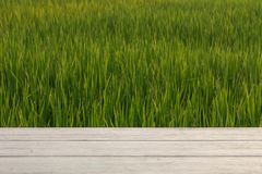 绿色米领域和木桌显示产品的 库存照片
