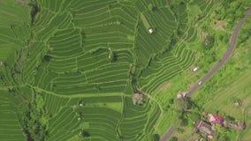 绿色米领域空中风景 大阳台的寄生虫视图增长的米种植园在巴厘岛,印度尼西亚 农业和 股票录像