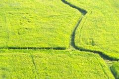 绿色米领域 免版税库存照片