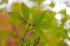 绿色纹理在秋天把改变的颜色留在 库存照片